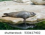 sea lion pups taking a nap | Shutterstock . vector #533617402