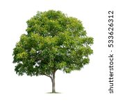 Stock photo isolated tree on white background 533626312