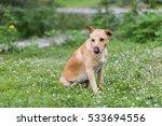 dogs thailand | Shutterstock . vector #533694556