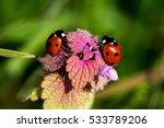 ladybugs on the meadow. macro... | Shutterstock . vector #533789206