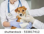 Stock photo veterinarian and assistant in vet clinic at work 533817412