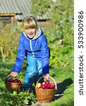 child picking apples on a farm... | Shutterstock . vector #533900986