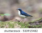 the siberian blue robin ... | Shutterstock . vector #533915482