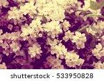 Vintage Jasmine Flowers...