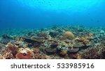 whitetip reef sharks on a... | Shutterstock . vector #533985916