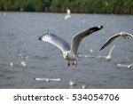 seagull and sunset gulls fly in ...   Shutterstock . vector #534054706