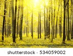 a path is in the autumn forest  ... | Shutterstock . vector #534059002