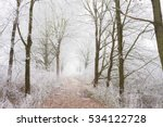 frozen trees with the small way.... | Shutterstock . vector #534122728