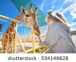 Young Funny Giraffe And...