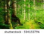 Natural Spruce Tree Forest Wit...