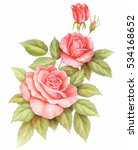 pink red vintage roses  flowers ... | Shutterstock . vector #534168652