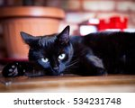 Stock photo lazy black cat laying by fireplace and christmas tree cozy home concept 534231748