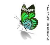 beautiful green monarch... | Shutterstock . vector #534237952
