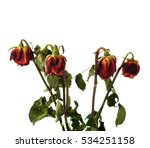 dried red roses over the white... | Shutterstock . vector #534251158