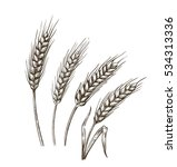 vector hand drawn wheat ears... | Shutterstock .eps vector #534313336