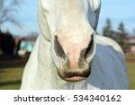 The Nostrils Of Horses