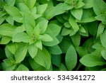 Nature Green Leaf Plant Wall...