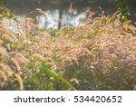 grassland | Shutterstock . vector #534420652