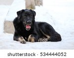 stray dog lies on the snow... | Shutterstock . vector #534444052