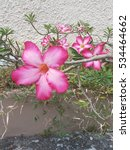 plenty of pink flower | Shutterstock . vector #534464662