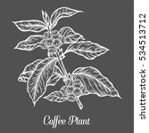 coffee plant branch with leaf ... | Shutterstock . vector #534513712