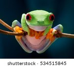 Stock photo the red eyed tree frog frog with red eyes wood beautiful green and blue colors exotic animal of 534515845