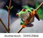 the red eyed tree frog. frog... | Shutterstock . vector #534515866