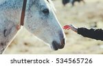woman hand petting white horse... | Shutterstock . vector #534565726