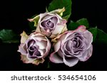 close up of lilac rose flowers. ... | Shutterstock . vector #534654106
