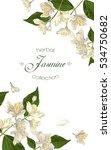 vector elegant jasmine flower... | Shutterstock .eps vector #534750682