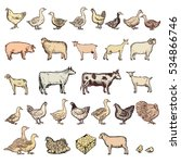 farm animals big collection... | Shutterstock .eps vector #534866746