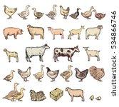 farm animals big collection...   Shutterstock .eps vector #534866746