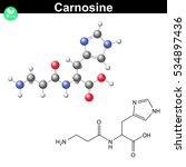 carnosine natural peptide  ... | Shutterstock .eps vector #534897436