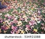 beautiful autumn leaves fall on ... | Shutterstock . vector #534921088