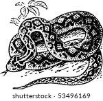 snake | Shutterstock .eps vector #53496169
