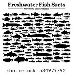 fish sorts and types. various... | Shutterstock .eps vector #534979792