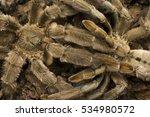 mating of tarantulas  trinidad... | Shutterstock . vector #534980572