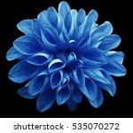 flower  light blue  dahlia ... | Shutterstock . vector #535070272
