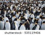 King Penguins At Gold Harbour....