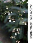 white flower close up | Shutterstock . vector #535164892