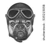 Portrait Of French Bulldog Wit...