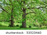 Two Majestic Plane Trees On...
