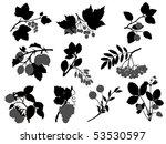berry | Shutterstock .eps vector #53530597