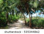 Path Between Tropical Plants ...