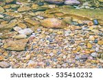 Small Tropical Fishes Near The...