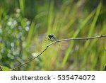 dragonfly | Shutterstock . vector #535474072