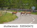 deer crossing the road. deer in ... | Shutterstock . vector #535545472