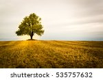Lonely Tree On A Field. Fall...
