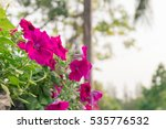 Beautiful Pink Flowers Are...