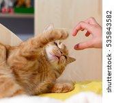 Stock photo cat a predator 535843582